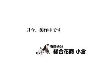 胡蝶蘭(3本立ち)